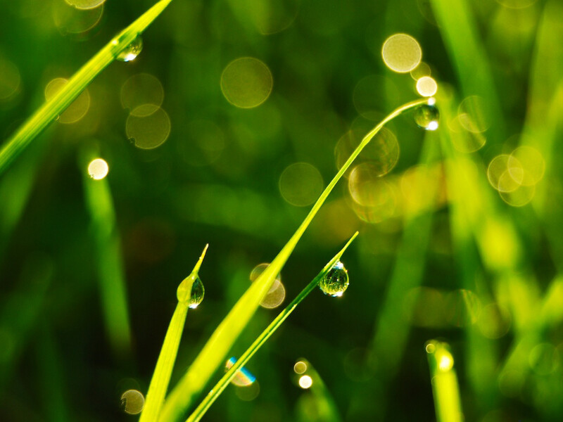 Trickling filters as an ideal sewage water treatment
